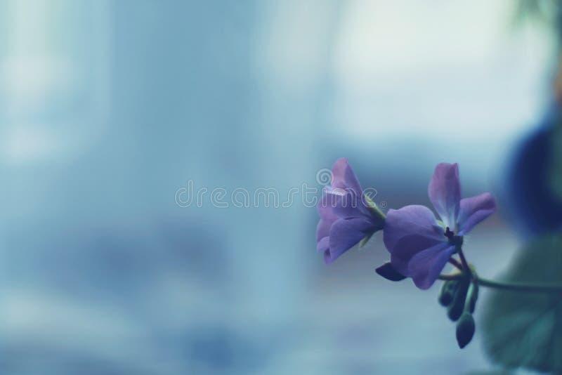 βιολέτα στοκ φωτογραφία με δικαίωμα ελεύθερης χρήσης
