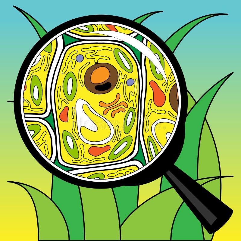 Βιολογική χλόη κυττάρων που κοιτάζει μέσω ενός πιό magnifier στοκ εικόνες