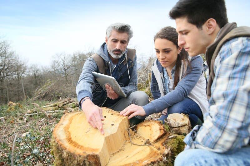 Βιολόγοι που αναλύουν τον κορμό δέντρων στοκ φωτογραφία με δικαίωμα ελεύθερης χρήσης