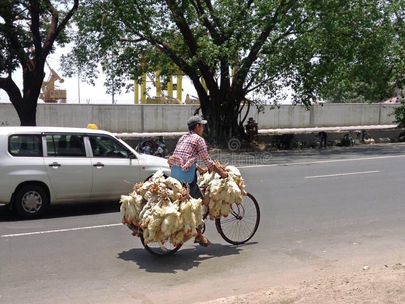Βιρμανός άτομο που οδηγά ένα ποδήλατο με τα ζωντανά κοτόπουλα σε ( Rangoon)  Yangon, ( Burma)  Το Μιανμάρ στοκ φωτογραφία με δικαίωμα ελεύθερης χρήσης