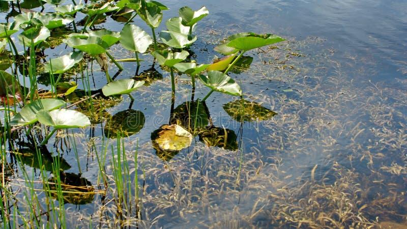 Βλάστηση στην τράπεζα στο Everglades στοκ φωτογραφίες με δικαίωμα ελεύθερης χρήσης