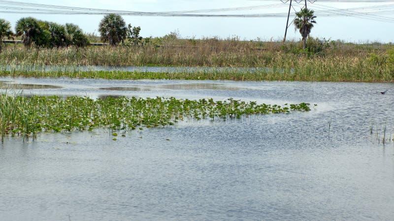 Βλάστηση στο Everglades στοκ φωτογραφία