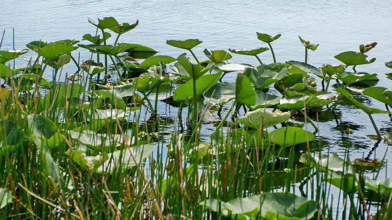 Βλάστηση στο Everglades στοκ εικόνα