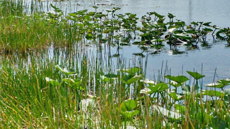 Βλάστηση στο Everglades στοκ εικόνες με δικαίωμα ελεύθερης χρήσης
