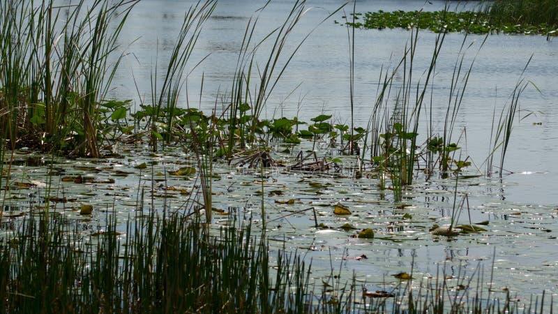 Βλάστηση στο Everglades στοκ φωτογραφία με δικαίωμα ελεύθερης χρήσης