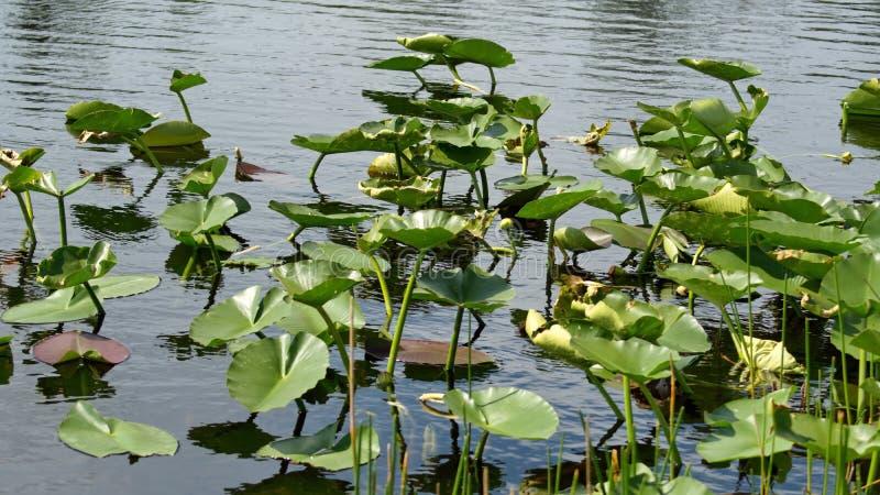 Βλάστηση στο Everglades στοκ εικόνα με δικαίωμα ελεύθερης χρήσης
