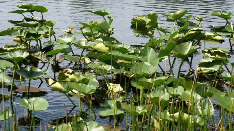 Βλάστηση στο Everglades στοκ φωτογραφίες