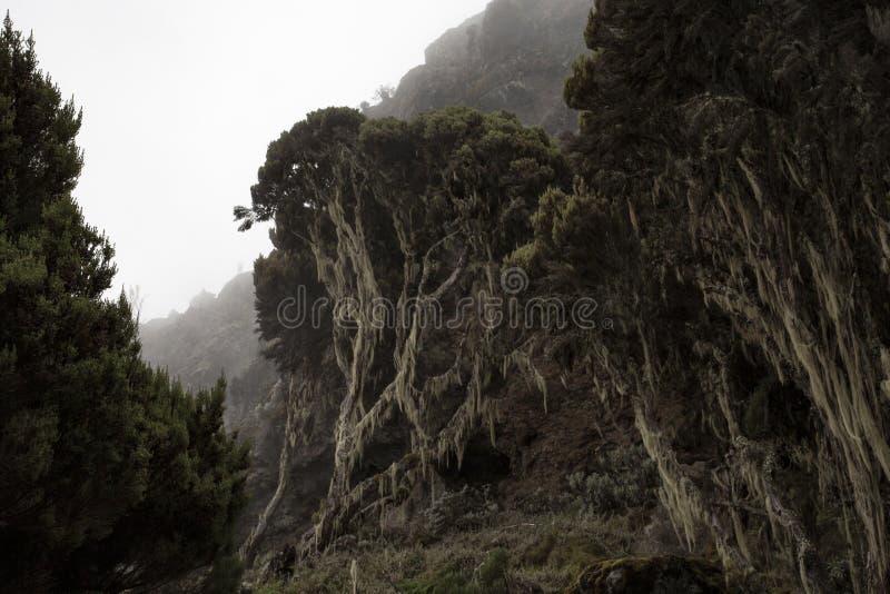 Βλάστηση Kilimanjaro στοκ εικόνα με δικαίωμα ελεύθερης χρήσης
