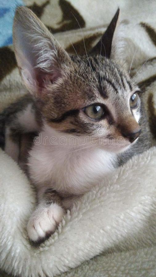 Βλέμμα μιας γάτας στοκ εικόνες