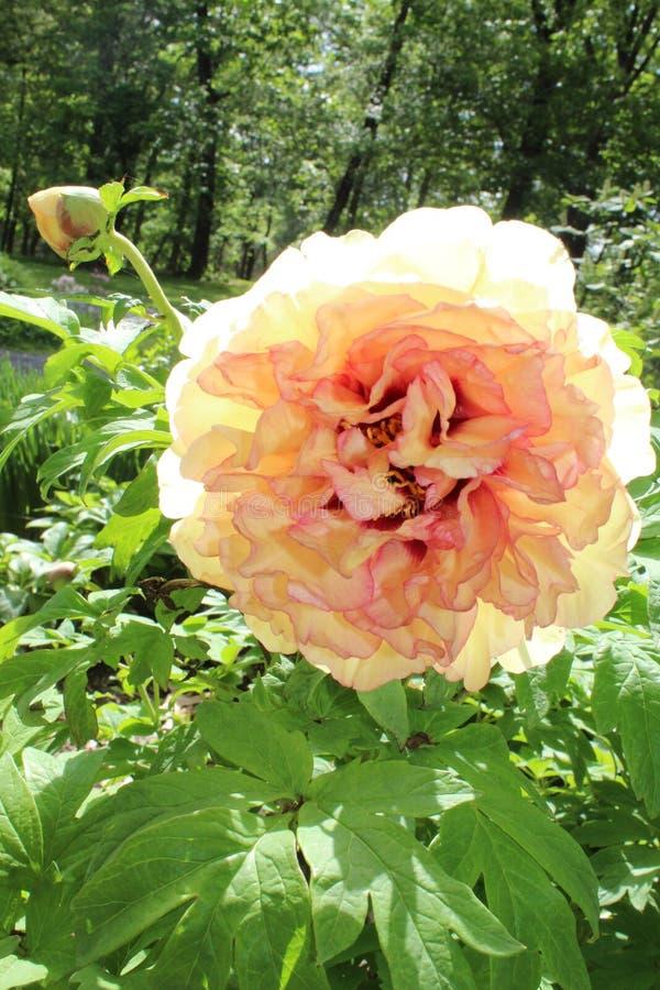 Βλαστάνοντας λουλούδι στοκ φωτογραφίες