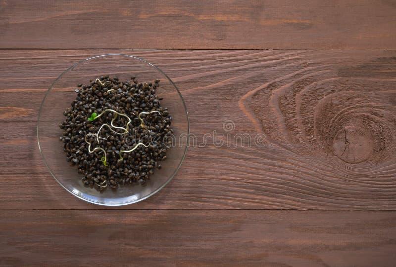Βλαστημένα σιτάρια κάνναβης στο καφετί ξύλινο υπόβαθρο Superfoods στοκ εικόνες με δικαίωμα ελεύθερης χρήσης