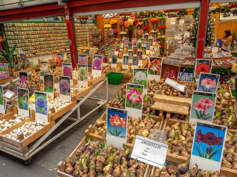 Βολβοί τουλιπών στο Bloemenmarkt στο κεντρικό Άμστερνταμ στοκ εικόνα