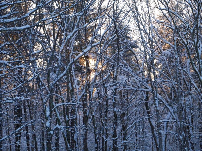 Βορειοανατολικό χιόνι ολονύκτιο στοκ φωτογραφίες με δικαίωμα ελεύθερης χρήσης