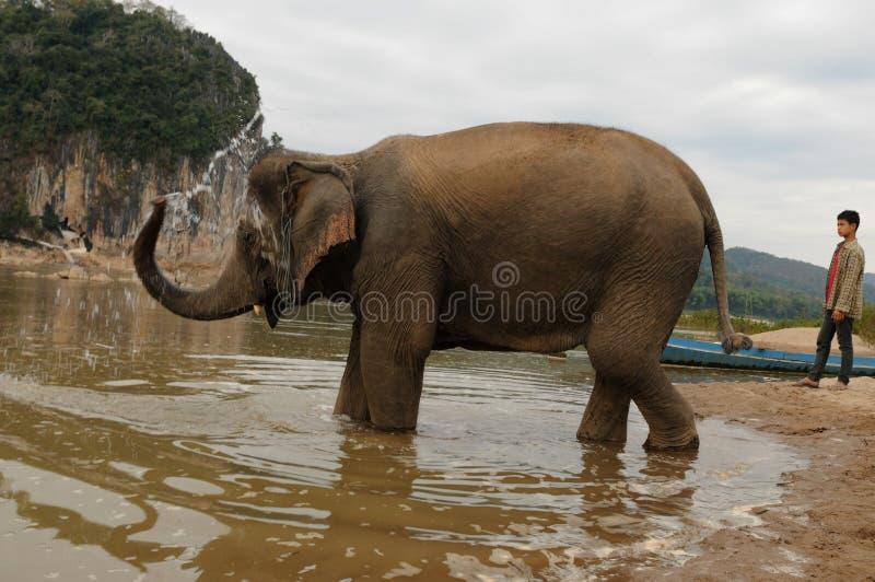 Βορράς-Λάος: Ο ελέφαντας παίρνει ένα λουτρό στο Mekong ποταμό αντίθετο στοκ εικόνα με δικαίωμα ελεύθερης χρήσης