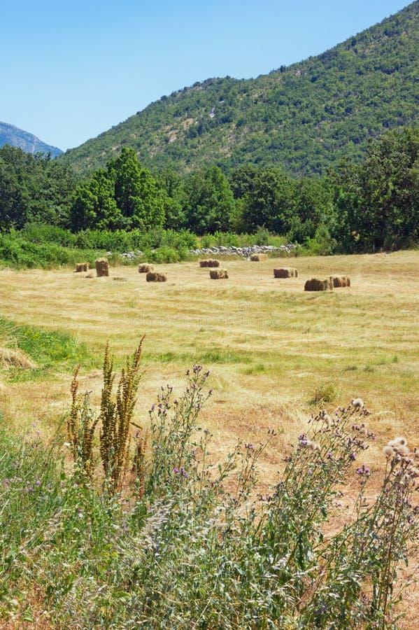 Βοσνιακή επαρχία μια καυτή θερινή ημέρα Κοιλάδα βουνών στις Άλπεις Dinaric Βοσνία-Ερζεγοβίνη στοκ εικόνες με δικαίωμα ελεύθερης χρήσης