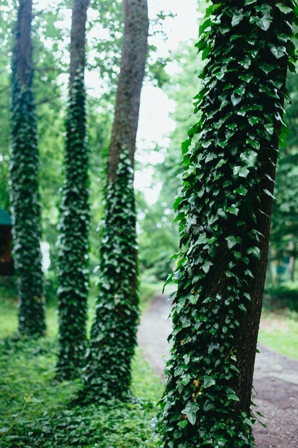 Βοτάνισμα των εγκαταστάσεων από το πράσινο δάσος στοκ εικόνες με δικαίωμα ελεύθερης χρήσης