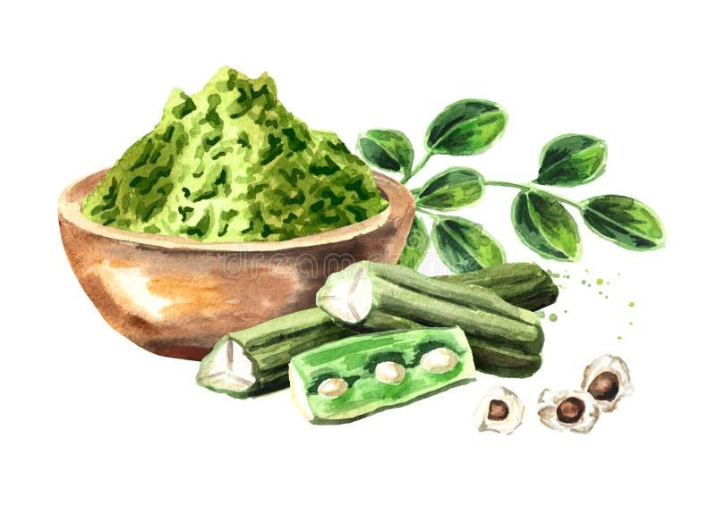 Βοτανικά Moringa φύλλα με τη σκόνη και τους λοβούς Superfood Συρμένη χέρι απεικόνιση Watercolor που απομονώνεται στο άσπρο υπόβαθ στοκ φωτογραφίες