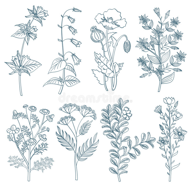 Βοτανική ιατρική οργανική θεραπεία λουλουδιών χορταριών η άγρια φυτεύει το διανυσματικό συμένος συνόλου υπό εξέταση ύφος διανυσματική απεικόνιση