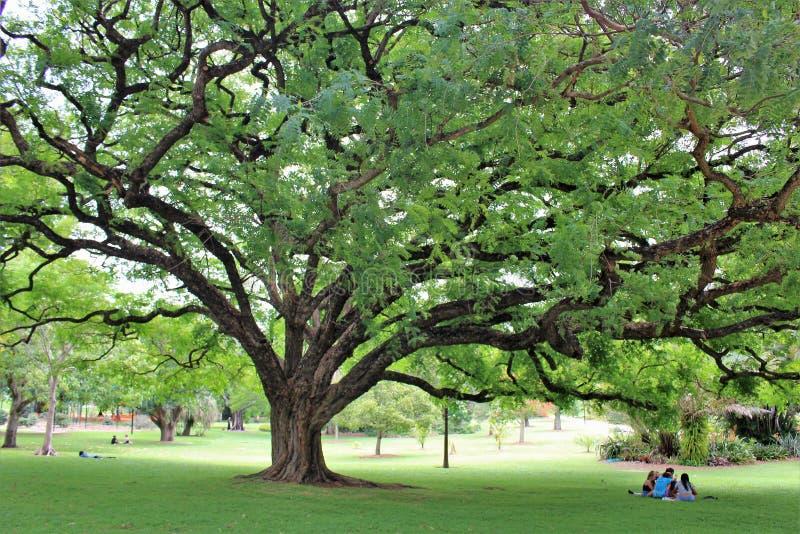Βοτανικοί κήποι πόλεων στο Μπρίσμπαν στοκ εικόνα με δικαίωμα ελεύθερης χρήσης