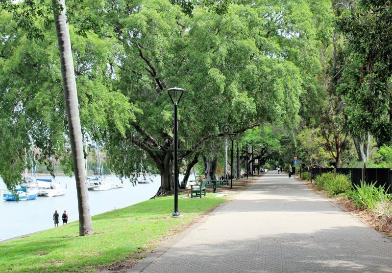 Βοτανικοί κήποι πόλεων στο Μπρίσμπαν στοκ φωτογραφία