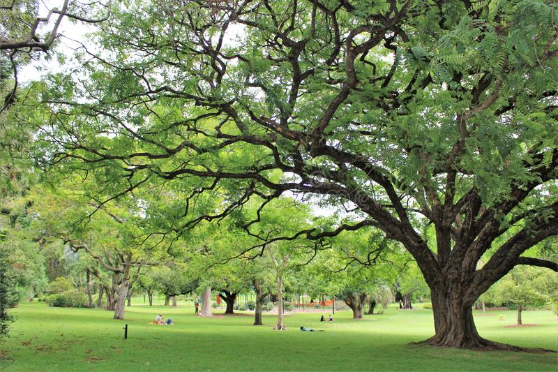 Βοτανικοί κήποι πόλεων στο Μπρίσμπαν στοκ φωτογραφίες