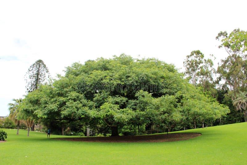 Βοτανικοί κήποι πόλεων στο Μπρίσμπαν στοκ εικόνες με δικαίωμα ελεύθερης χρήσης