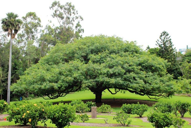Βοτανικοί κήποι πόλεων στο Μπρίσμπαν στοκ εικόνες
