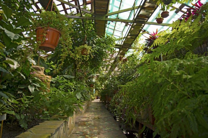 Βοτανικός κήπος παντού υπάρχουν διάφορες πολύ φωτεινές όμορφες λουλούδια και εγκαταστάσεις στοκ φωτογραφία