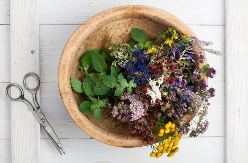 βοτανικό απομονωμένο λευκό ιατρικής έννοιας φρέσκα χορτάρια λουλουδιών στοκ εικόνες