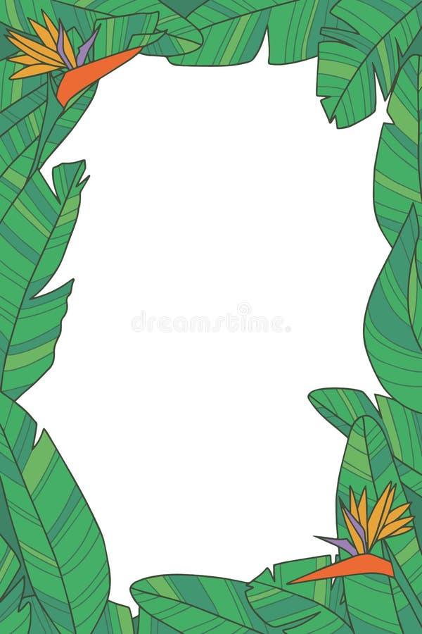 Βοτανικό διανυσματικό πλαίσιο φυτών με τα πράσινα εξωτικά φύλλα λουλουδιών πουλιών Strelitzia του παραδείσου στο διαφανές υπόβαθρ απεικόνιση αποθεμάτων