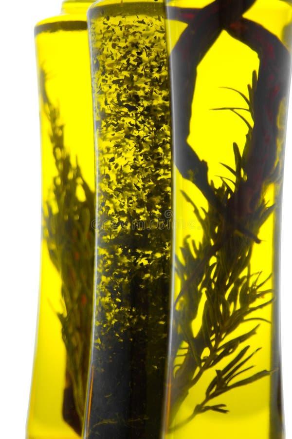 βοτανικό πετρέλαιο στοκ φωτογραφία