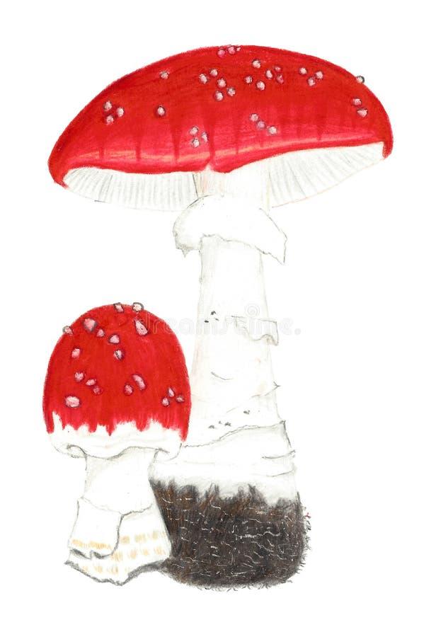 Βοτανικό σχέδιο των κόκκινων μανιταριών Toadstool ελεύθερη απεικόνιση δικαιώματος