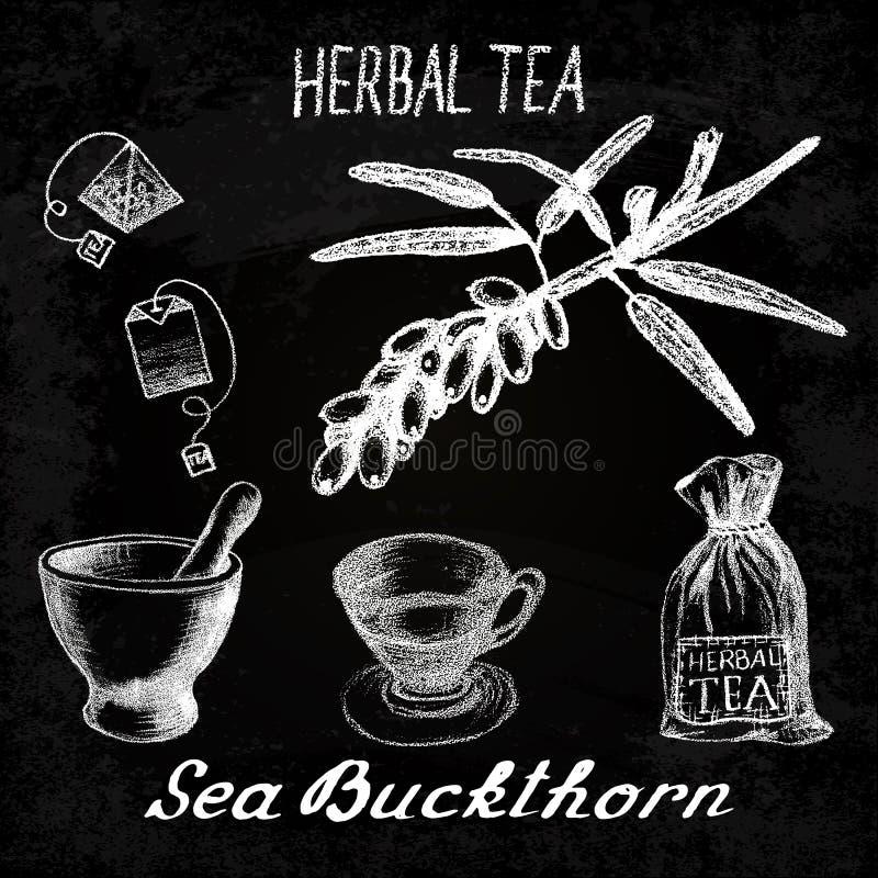 Βοτανικό τσάι λευκαγκαθιών Σύνολο πινάκων κιμωλίας στοιχείων διανυσματική απεικόνιση