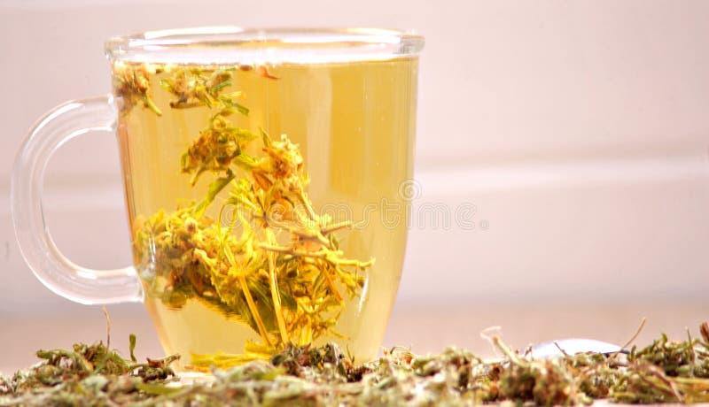 Βοτανικό τσάι καννάβεων στοκ φωτογραφία με δικαίωμα ελεύθερης χρήσης