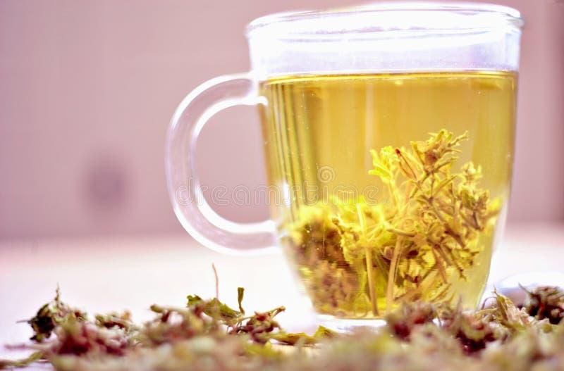 Βοτανικό τσάι καννάβεων στοκ εικόνες με δικαίωμα ελεύθερης χρήσης