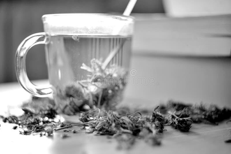 Βοτανικό τσάι καννάβεων στοκ εικόνα με δικαίωμα ελεύθερης χρήσης