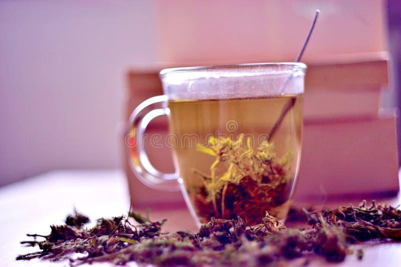 Βοτανικό τσάι καννάβεων στοκ φωτογραφίες