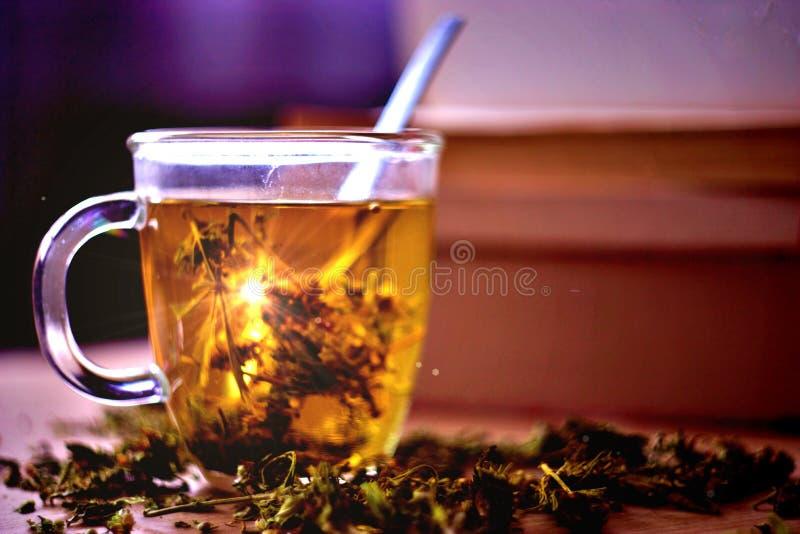 Βοτανικό τσάι καννάβεων στοκ φωτογραφία