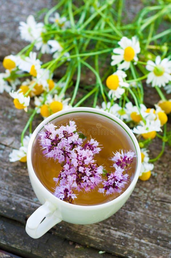 Βοτανικό τσάι με τη μαντζουράνα στοκ φωτογραφία με δικαίωμα ελεύθερης χρήσης