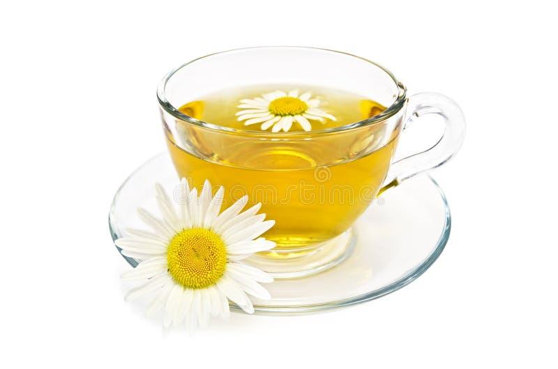 Βοτανικό τσάι σε ένα φλυτζάνι γυαλιού με τις μαργαρίτες στοκ εικόνες