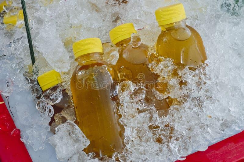 Βοτανικό τσάι χρυσάνθεμων ποτών στο πλαστικό μπουκάλι στον πάγο στοκ εικόνες