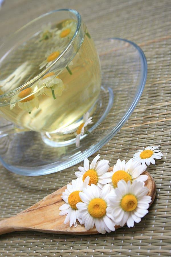 βοτανικό τσάι στοκ φωτογραφίες