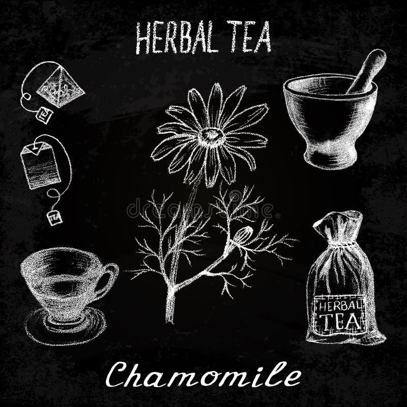 Βοτανικό τσάι Chamomile Σύνολο πινάκων κιμωλίας στοιχείων απεικόνιση αποθεμάτων