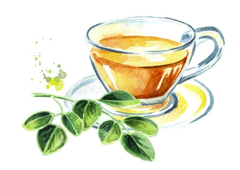 Βοτανικό Moringa τσάι Superfood Συρμένη χέρι απεικόνιση Watercolor που απομονώνεται στο άσπρο υπόβαθρο στοκ εικόνες με δικαίωμα ελεύθερης χρήσης