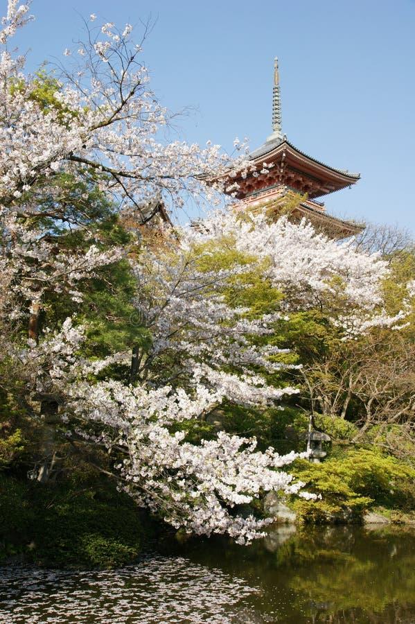 βουδιστικός ναός kiyomizudera κερασιών στοκ εικόνα με δικαίωμα ελεύθερης χρήσης