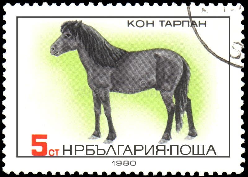 ΒΟΥΛΓΑΡΙΑ - CIRCA 1980: ένα γραμματόσημο, που τυπώνεται στη Βουλγαρία, παρουσιάζει άλογο Tarpan απεικόνιση αποθεμάτων