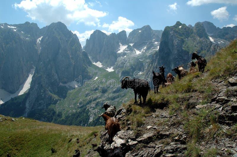 βουνά αιγών στοκ εικόνες με δικαίωμα ελεύθερης χρήσης