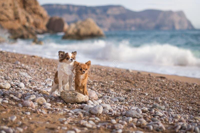Βουνά θάλασσας σκυλιών στοκ φωτογραφία με δικαίωμα ελεύθερης χρήσης