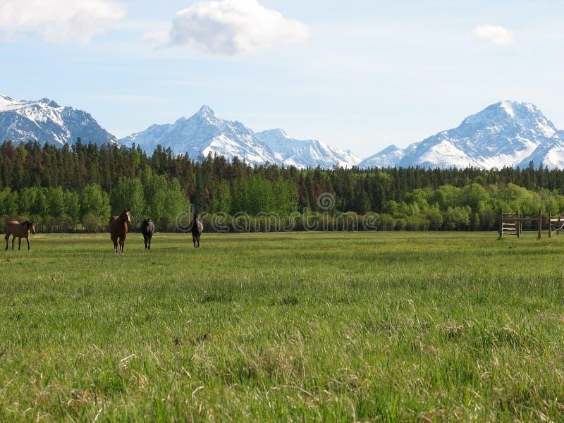 Βουνά και άλογα στοκ εικόνες με δικαίωμα ελεύθερης χρήσης