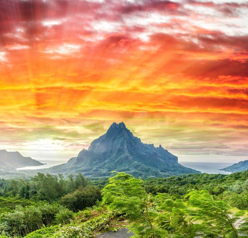 Βουνά και βλάστηση της Πολυνησίας στοκ εικόνες με δικαίωμα ελεύθερης χρήσης